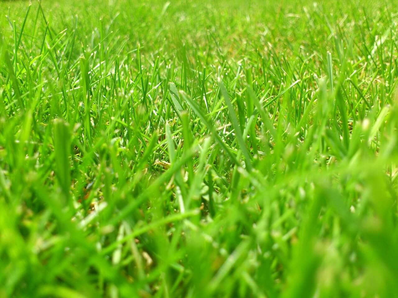 Types of Lawn Grass